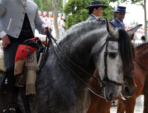 one of the (many!) beautiful Andalusian horses at the feria