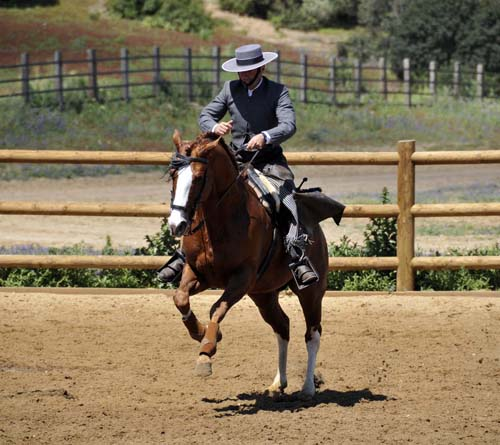 "the traditional ""ranch dressage"" is vaguely similar to reining"