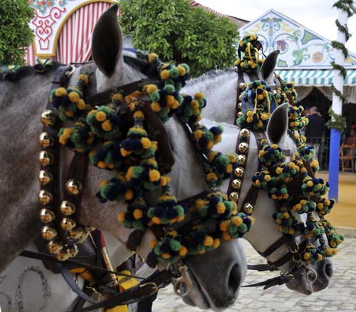 bridles on three horses at the Seville feria, showing the traditional pom-poms and bells