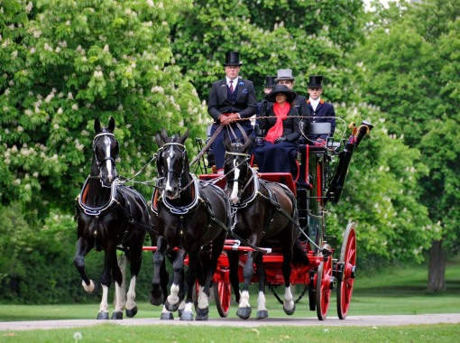 Danny Kindle, driving the Household Cavalry's coach, won the regimental coach division; he also won the award for the best turnout