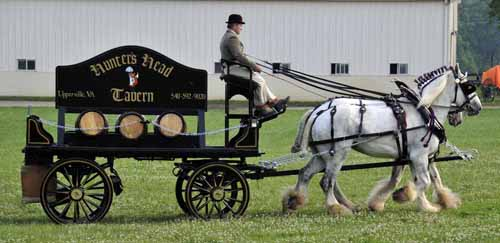 "Ayrshire Farm gave a demonstration of a beer dray, pulled by two huge Shire horses; after watching a few turns around the ""green,"" everyone was invited to come take a close look at the wagon, the horses, and the harness"