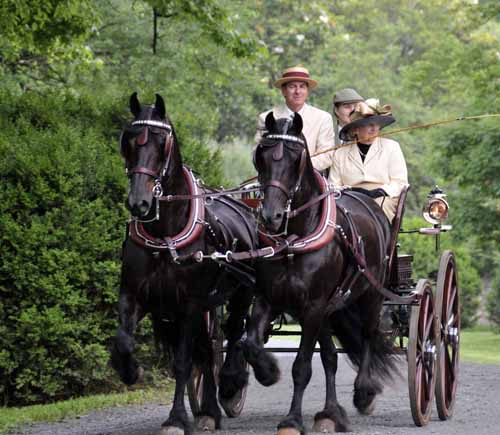 Tom Burgess, driving his pair of Friesians's on the twilight drive; his wife Gloria is the groom in the back, and Gloria's mother is sitting beside Tom (to see what they're looking at, see below)