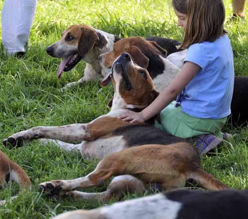 happy hounds and happy kids