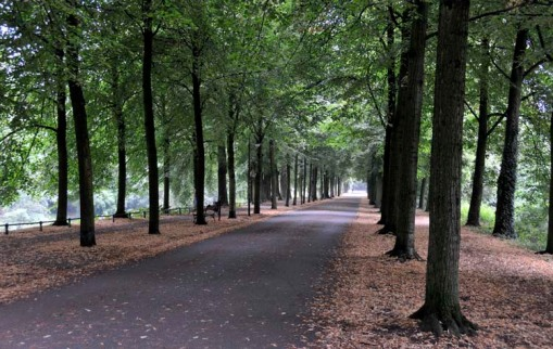 a small section of Münster's lovely, tree-lined Promenade
