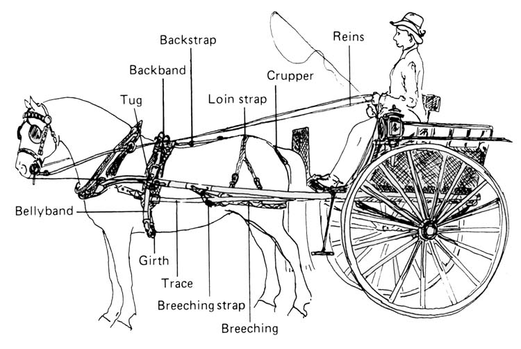 diagram of draft horse hitch and harness get free image about wiring diagram