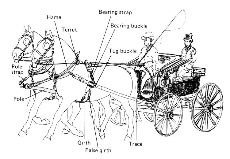 Horse       harness    project