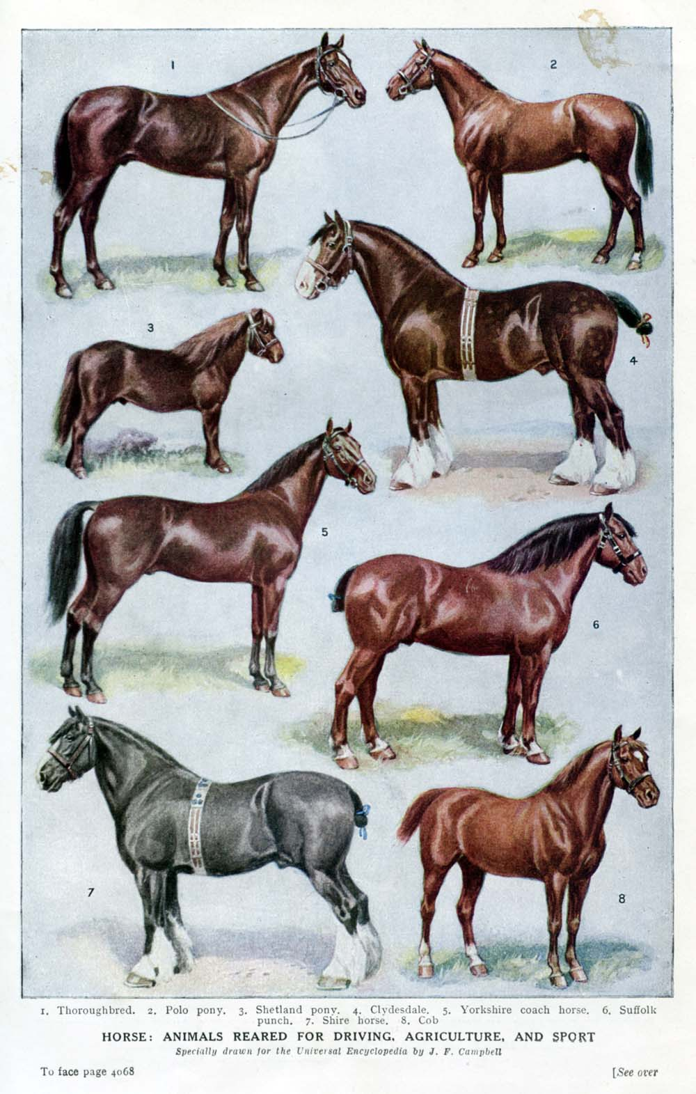 Types Of Horse